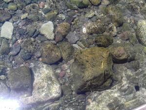 Acqua di Capraia